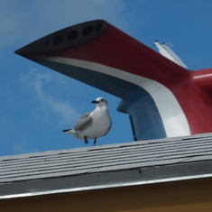 Nassau, Bahamas - Carnival photo bombed my bird