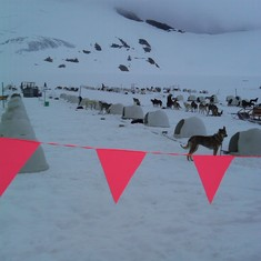 Dog Camp--Norris Glacier--Juneau, AK