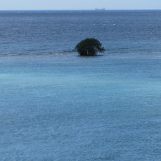 Aruba blue water with a tree growing?