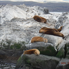 Ushuaia, Tierra Del Fuego, Argentina - Seals enjoying the sun
