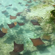 Stingray lagoon Atlantis