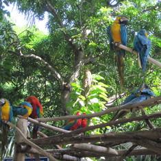 Cartagens birds