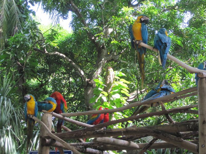 Cartagena, Colombia - Cartagens birds