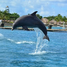 Time to fufill the bucket list and swim with the dolphins!