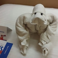 Towel animals greeted us with an activities pamplet and schedule each night