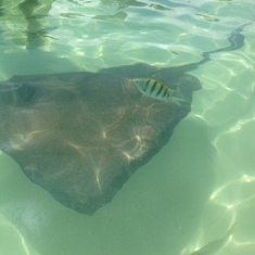 Stingray excursion at Half Moon Cay.