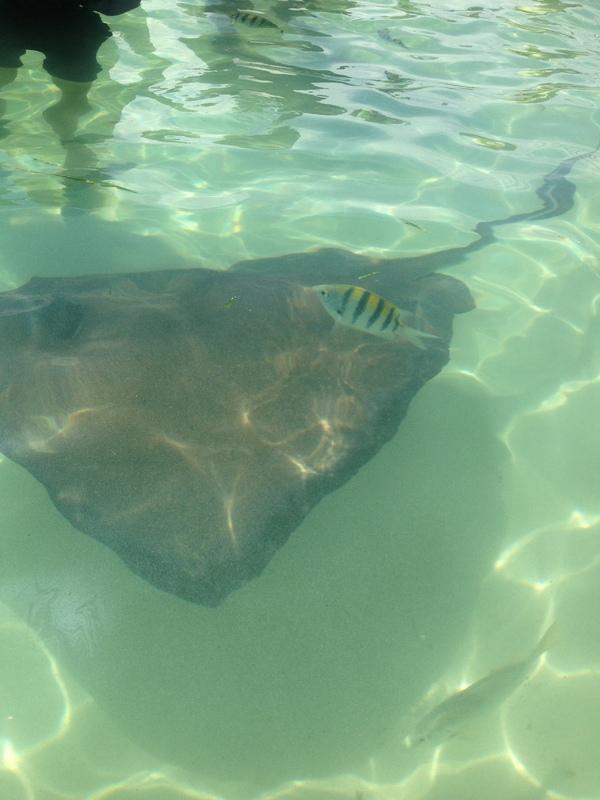 Half Moon Cay, Bahamas (Private Island) - Stingray excursion at Half Moon Cay.