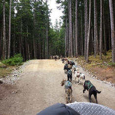 Dog sledding in Skagway