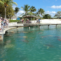 George Town, Grand Cayman - Turtle farm