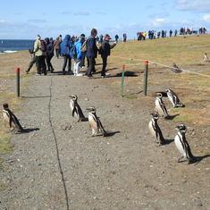 Punta Arenas, Chile - Punta Arenas
