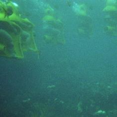 SUB - Nassau