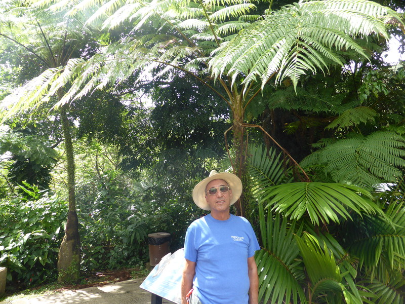 Milt in the Rain Forest - Carnival Liberty