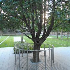 world trade center lone survival tree
