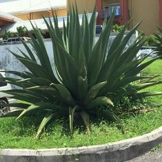 Castries, St. Lucia - Fun