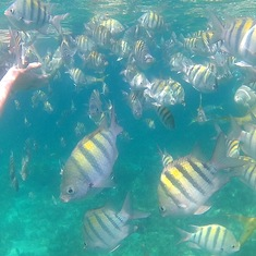 Nassau, Bahamas - Snorkelling/touching/feeding fish