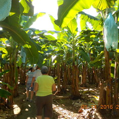 Going into the Del Monte  banana plantation in Costa Rica