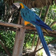 Nassau, Bahamas - Ardastra Gardens and Zoo