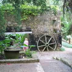 Falmouth, Jamaica - Ruins Sugar Plantation Jamaica