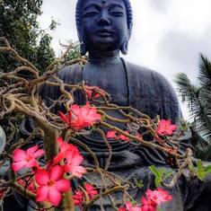 Kahului, Maui - Buddha Lahaina