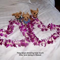 My boys with our leis in Honolulu