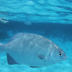 George Town, Grand Cayman - Snorkeling and Stingray in Grand Cayman