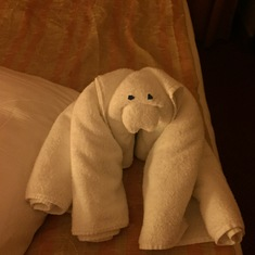 towel animals every night