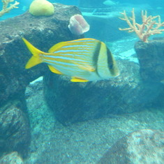Atlantis at the aquarium