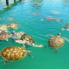 Green Turtle Farm