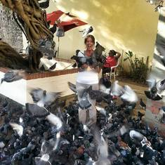 Puerto Rico Pigeons!