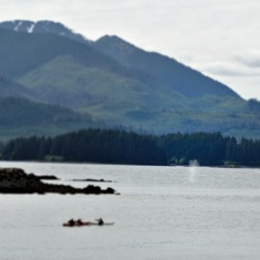 Icy Strait Point (Hoonah), Alaska - Whales spraying in Hoonah