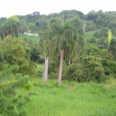 San Juan, Puerto Rico - Rain Forest View