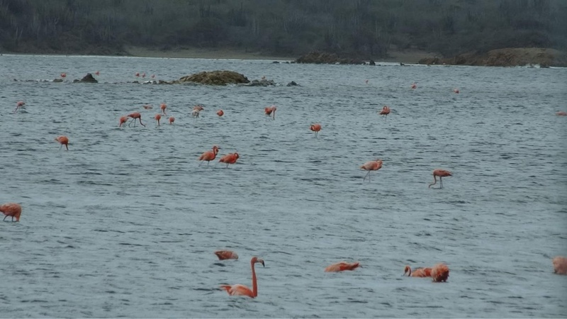 The flamingo sanctuary