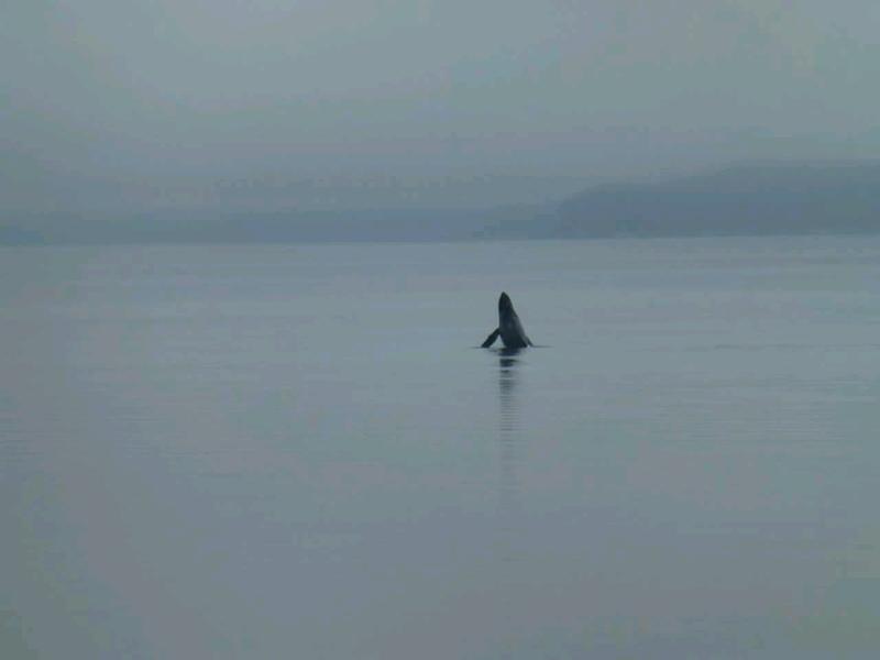 Saw a whale!
