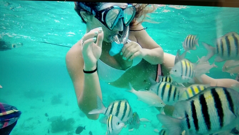 George Town, Grand Cayman - Swimming with the fish
