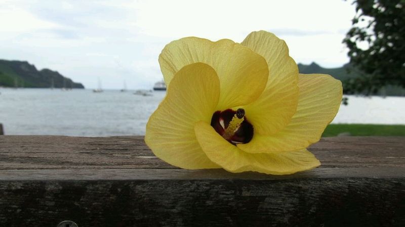 Flower in Nuku Hiva, Marquesas Islands in French Polynesia