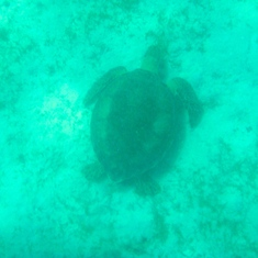 Turtle, St John, US Virgin Island