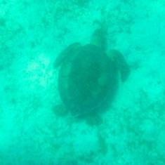 Charlotte Amalie, St. Thomas - Turtle, St John, US Virgin Island